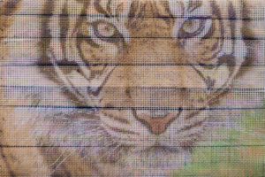 Foto op metaalgaas - tijger houten achtergrond