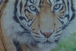 Foto op metaalgaas - tijger zwarte achtergrond