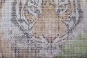 Foto op metaalgaas - tijger witte achtergrond